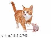 Cat and Rat. Стоковое фото, фотограф Erik Lam / easy Fotostock / Фотобанк Лори