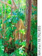 Купить «Rainforest jungle in central america», фото № 18792855, снято 16 февраля 2019 г. (c) easy Fotostock / Фотобанк Лори