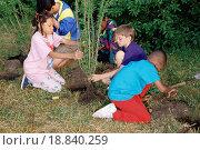 Купить «Children planting trees», фото № 18840259, снято 17 февраля 2019 г. (c) easy Fotostock / Фотобанк Лори