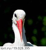 Купить «Blauäugiger Storch», фото № 19028395, снято 21 марта 2019 г. (c) easy Fotostock / Фотобанк Лори