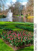 tulip garden in Keukenhof. Стоковое фото, фотограф Albertus Engbers / easy Fotostock / Фотобанк Лори