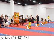 """Выступление """"The Best"""" на выставке собак, эксклюзивное фото № 19121171, снято 28 ноября 2015 г. (c) Константин Косов / Фотобанк Лори"""