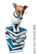Купить «dog book stack», фото № 19210435, снято 21 февраля 2019 г. (c) easy Fotostock / Фотобанк Лори