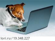 Купить «dog computer», фото № 19348227, снято 21 февраля 2020 г. (c) easy Fotostock / Фотобанк Лори