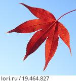 Купить «autumn fall red light tree», фото № 19464827, снято 20 мая 2019 г. (c) PantherMedia / Фотобанк Лори