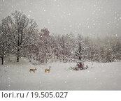 Купить «aging winter photography», фото № 19505027, снято 19 марта 2019 г. (c) PantherMedia / Фотобанк Лори