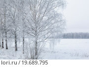 Купить «Березы покрыты инеем в морозный день при температуре ниже -25 градусов», фото № 19689795, снято 8 января 2016 г. (c) Николай Винокуров / Фотобанк Лори