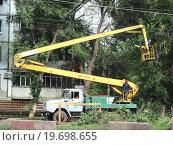 Купить «Обрезка деревьев», фото № 19698655, снято 19 сентября 2011 г. (c) Светлана Кириллова / Фотобанк Лори