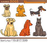 Купить «purebred dogs cartoon illustration set», иллюстрация № 19817599 (c) easy Fotostock / Фотобанк Лори