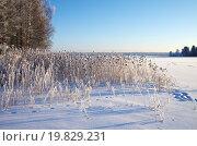 Купить «Валдайское озеро, Новгородская область, Россия», фото № 19829231, снято 9 января 2016 г. (c) Natalya Sidorova / Фотобанк Лори