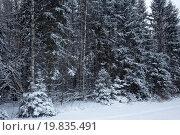 Купить «Деревья, покрытые снегом, в непроходимом зимнем лесу», фото № 19835491, снято 6 января 2016 г. (c) Николай Винокуров / Фотобанк Лори
