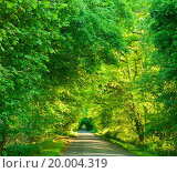 Купить «Scenic road through green forest in England», фото № 20004319, снято 8 июня 2013 г. (c) easy Fotostock / Фотобанк Лори