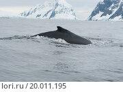 Купить «A humpback whale in the Southern Ocean», фото № 20011195, снято 18 сентября 2018 г. (c) easy Fotostock / Фотобанк Лори