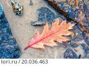 Купить «Fallen yellow leaf on the water in autumn», фото № 20036463, снято 20 сентября 2019 г. (c) easy Fotostock / Фотобанк Лори