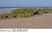 Купить «Водоросли на пляже во время отлива», видеоролик № 20058007, снято 20 августа 2019 г. (c) Павел Котельников / Фотобанк Лори