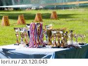 Наградные кубки с лентами и призовые места на выставке собак, эксклюзивное фото № 20120043, снято 7 июня 2015 г. (c) Константин Косов / Фотобанк Лори