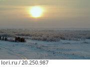 Зимний закат. Стоковое фото, фотограф Елена Чегодаева / Фотобанк Лори