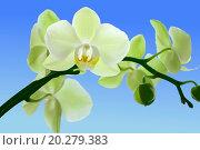 Ветвь орхидеи на фоне весеннего неба. Стоковое фото, фотограф Нефедьев Леонид / Фотобанк Лори
