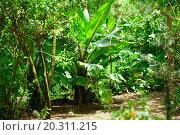 Купить «trees and palm in the jungle», фото № 20311215, снято 22 марта 2013 г. (c) easy Fotostock / Фотобанк Лори
