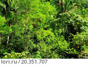 Купить «Background of lush tropical jungle at Pacific coast of Mexico», фото № 20351707, снято 16 ноября 2009 г. (c) easy Fotostock / Фотобанк Лори