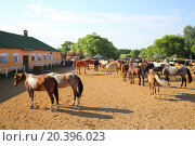 Купить «MOZHAISK, RUSSIA - JUN 08, 2014: Horse stable with a shelter for horses on the equestrian ranch Avanpost», фото № 20396023, снято 8 июня 2014 г. (c) Losevsky Pavel / Фотобанк Лори