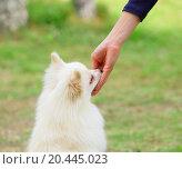 Купить «feeding dog», фото № 20445023, снято 21 декабря 2012 г. (c) easy Fotostock / Фотобанк Лори