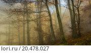 Купить «Nature Autumn Colorful Misty Forest», фото № 20478027, снято 22 июля 2019 г. (c) PantherMedia / Фотобанк Лори