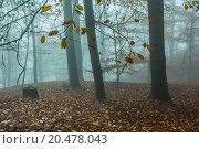 Купить «Nature Autumn Foggy Forest», фото № 20478043, снято 22 июля 2019 г. (c) PantherMedia / Фотобанк Лори