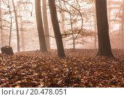 Купить «Nature Autumn Foggy Forest», фото № 20478051, снято 22 июля 2019 г. (c) PantherMedia / Фотобанк Лори
