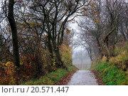 Купить «Way through autumn landscape with fog», фото № 20571447, снято 15 июля 2020 г. (c) easy Fotostock / Фотобанк Лори