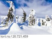 Купить «Красивая зимняя страна чудес с заснеженными деревьями необычной формы», фото № 20721459, снято 14 марта 2015 г. (c) Евгений Ткачёв / Фотобанк Лори