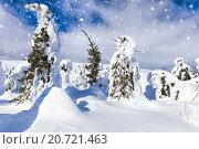Купить «Падающий снег в зимней стране чудес с деревьями необычной формы», фото № 20721463, снято 14 марта 2015 г. (c) Евгений Ткачёв / Фотобанк Лори
