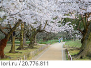 Купить «People walking under cherry trees in blossom in Koraku-en Garden, Okayama, Okayama Prefecture, Japan, Asia», фото № 20776811, снято 2 апреля 2015 г. (c) age Fotostock / Фотобанк Лори