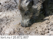 Купить «Digging for Truffels (1)», фото № 20872807, снято 17 июня 2019 г. (c) PantherMedia / Фотобанк Лори