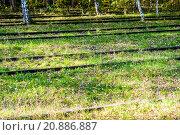 Купить «Schoeneberger Suedgelaende Nature Park», фото № 20886887, снято 22 мая 2019 г. (c) PantherMedia / Фотобанк Лори
