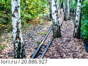 Купить «Schoeneberger Suedgelaende Nature Park», фото № 20886927, снято 22 мая 2019 г. (c) PantherMedia / Фотобанк Лори