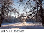 Зимний пейзаж. Стоковое фото, фотограф Chutniza / Фотобанк Лори