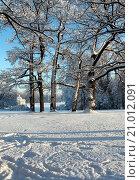 Зимний день. Стоковое фото, фотограф Chutniza / Фотобанк Лори