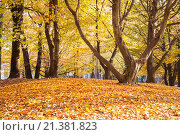 Купить «The change of leafs on trees in autumn time. Vigevano, Lombardy. Italy», фото № 21381823, снято 8 ноября 2015 г. (c) age Fotostock / Фотобанк Лори