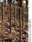 Купить «Vietnam, Dien Bien Phu, A1 Hill, Eliane, battle site of the final Vietnamese military victory over the French in 1954, barbed wire.», фото № 21434951, снято 21 февраля 2015 г. (c) age Fotostock / Фотобанк Лори