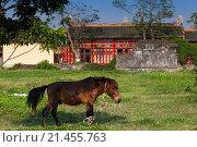 Купить «Vietnam, Hue, Hue Imperial City, horse.», фото № 21455763, снято 25 февраля 2015 г. (c) age Fotostock / Фотобанк Лори