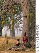 children under a baobab tree, Betammarinbe village in the area around Natitingu, Atakora department, northwestern Benin, Africa. Редакционное фото, фотограф Christian Goupi / age Fotostock / Фотобанк Лори