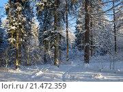 Купить «Зимний лес», фото № 21472359, снято 24 января 2016 г. (c) Елена Коромыслова / Фотобанк Лори