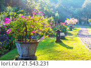 Купить «In garden», фото № 21543231, снято 25 мая 2014 г. (c) easy Fotostock / Фотобанк Лори