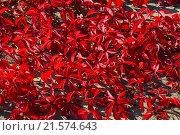 Купить «Пятилисточковый девичий виноград (виргинский) (лат. Parthenocissus quinquefolia)», эксклюзивное фото № 21574643, снято 25 сентября 2015 г. (c) lana1501 / Фотобанк Лори