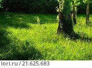 Зеленая трава с одуванчиками в летнем лесу. Стоковое фото, фотограф Людмила Герасимова / Фотобанк Лори