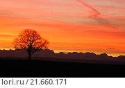 Купить «tree hill december mountains sunrise», фото № 21660171, снято 20 июня 2019 г. (c) PantherMedia / Фотобанк Лори