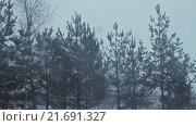 Купить «Снегопад на фоне хвойных деревьев», видеоролик № 21691327, снято 25 января 2016 г. (c) Aleksey Popov / Фотобанк Лори