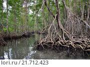 Мангровый лес. Стоковое фото, фотограф Юлия Бубличенко / Фотобанк Лори