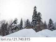 Купить «Зимний лес в горах», фото № 21740815, снято 21 января 2016 г. (c) Анатолий Типляшин / Фотобанк Лори